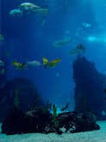 East London Aquarium